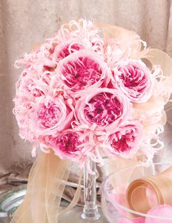 """Miranda"" Garden Rose by David Austin Roses"