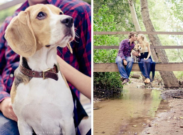 dog-engagement-shoot-erna-loock-002